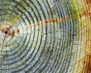 Tree rings, dendrochronolgy