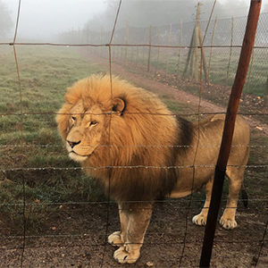 Lion-Sanctuary