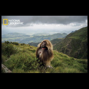 From National Geographic Article