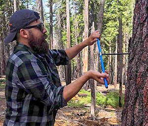 Tree Ring Sampling
